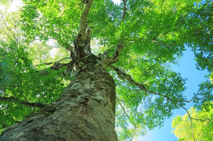 大樹を見上げる_1768147_M