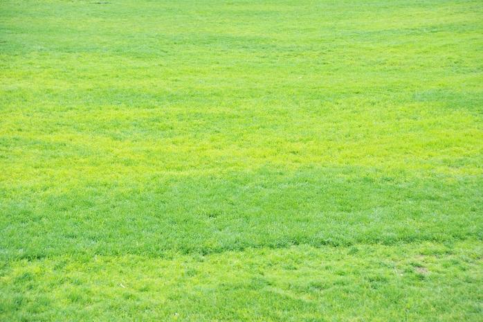 一面の芝生_1964753_M