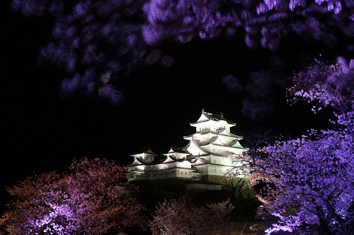 兵庫姫路城の夜桜の写真