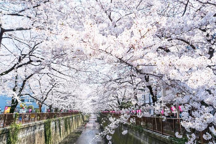 目黒川のお花見スポット