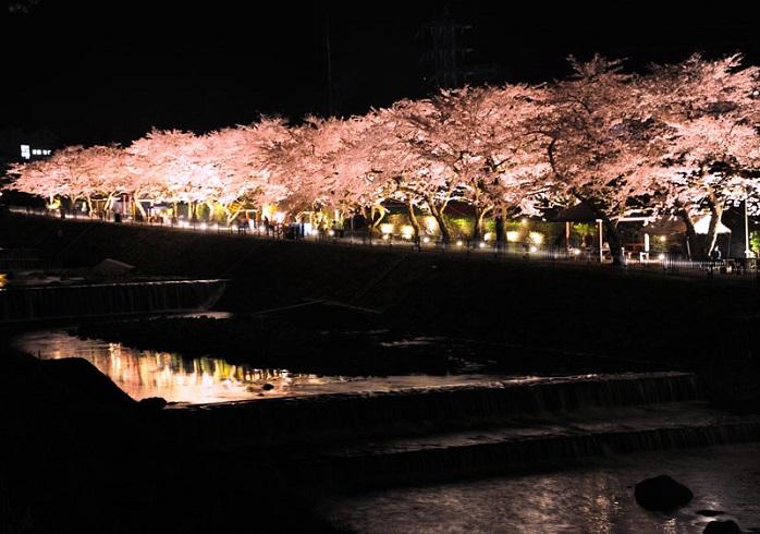 箱根宮城野早川堤の夜桜