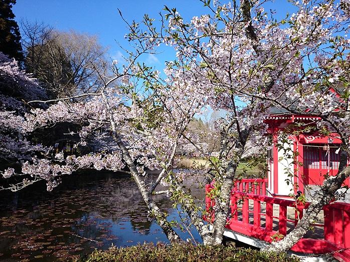 桜まつりでにぎわう茂原公園(千葉)