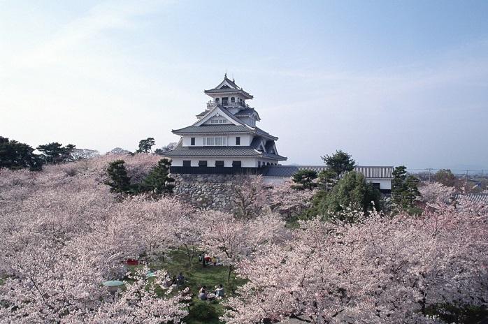 桜に囲まれる長浜城の天守閣