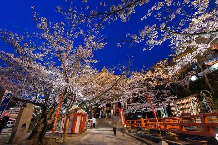 和歌山紀三井寺の夜桜の写真
