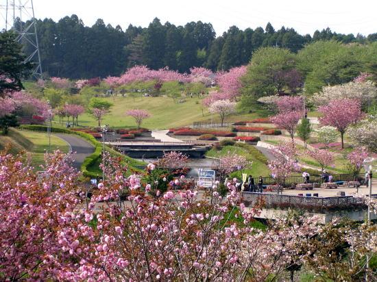 八重桜まつりでにぎわう静峰ふるさと公園(茨城)