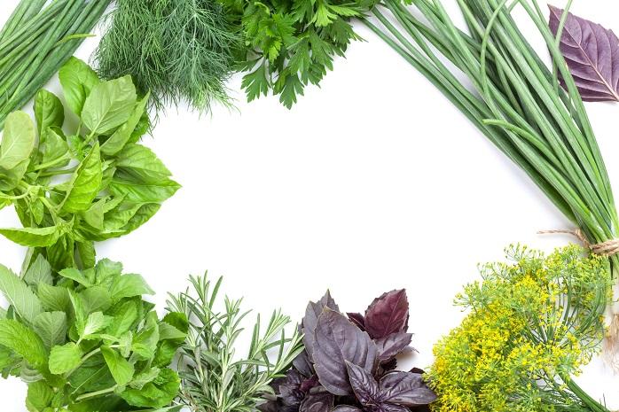 半日陰で育つ野菜の写真