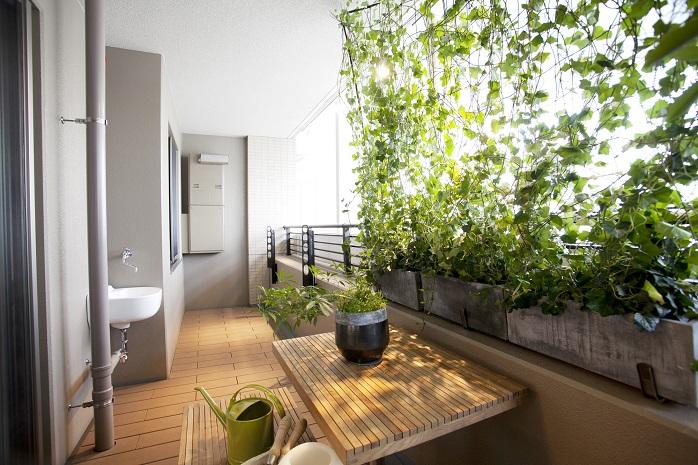 ベランダの家庭菜園の写真