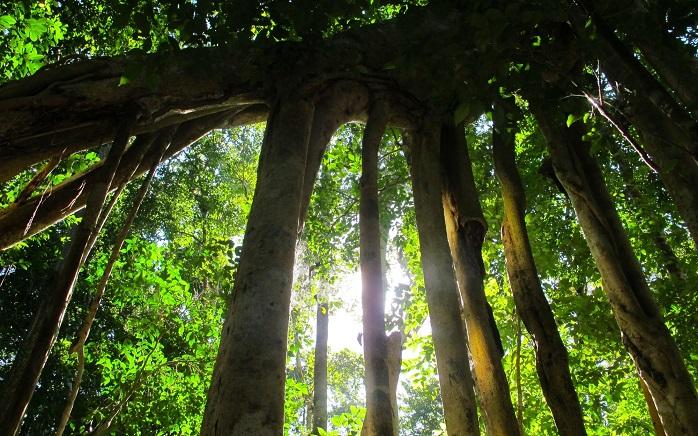 ピーマンが育つ熱帯の環境