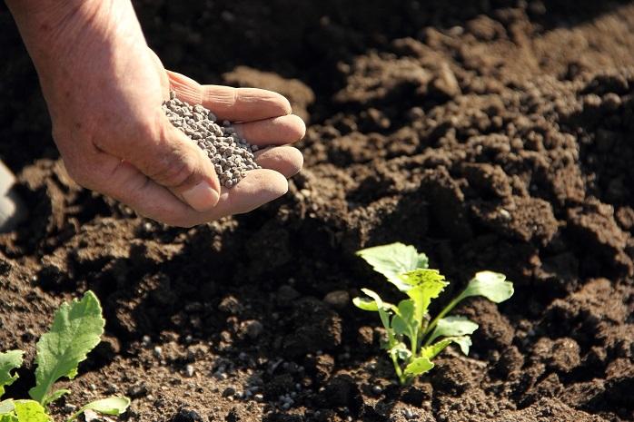 苗の植えつけの際に元肥を施している