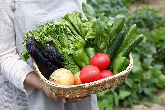 収穫された夏野菜の写真