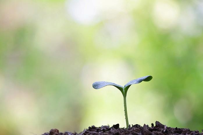 土から新芽が発芽している写真