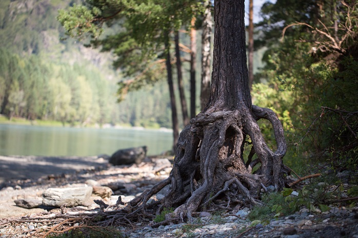 川辺にたたずむ老木
