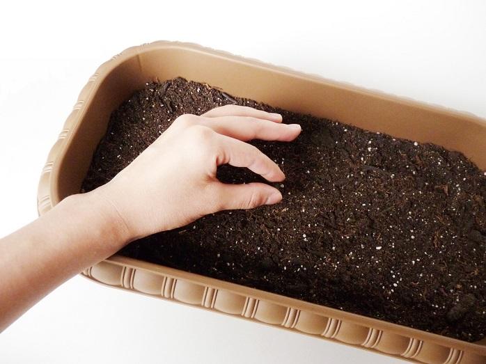プランターの土に種を植える