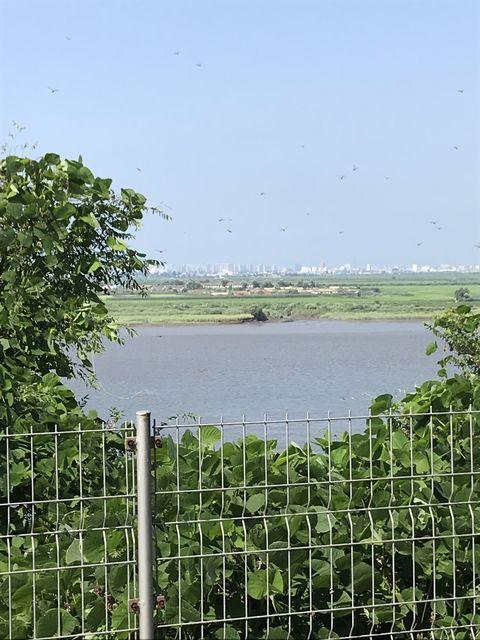 税関の建物からの眺め。手前は北朝鮮の柳草島、奥は丹東市内