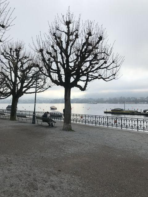 近くのチューリッヒ湖